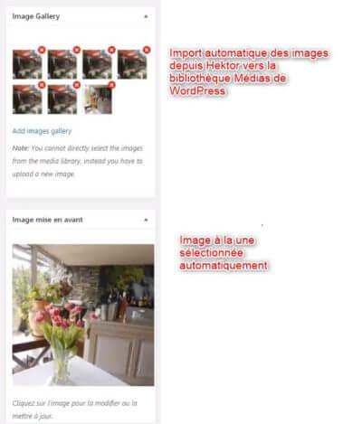 import des images hektor dans la bibliothèque media de wordpress